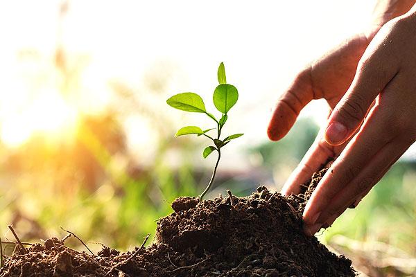 haende-schuetzen-pflanze